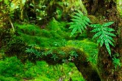Integridad del bosque Fotografía de archivo