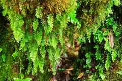 A integridade da floresta Fotos de Stock Royalty Free