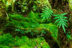Integrity of the forest Stock Photography