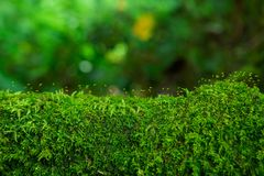 The integrity of the forest. Royalty Free Stock Photos