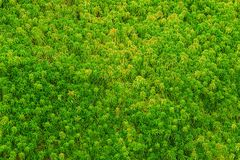 The integrity of the forest. Stock Photography