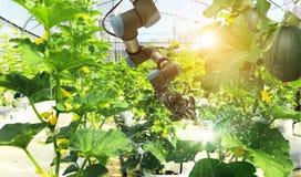 Inteligência artificial Robô que poliniza frutas e legumes foto de stock royalty free