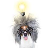 Inteligentny mądrze pies z pomysłem zdjęcie stock