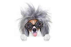 Inteligentny mądrze pies z pomysłem zdjęcia stock