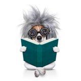 Inteligentny mądrze psi czytanie książka obraz stock