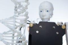 Inteligentny robot gapi się przy modelem DNA Fotografia Royalty Free