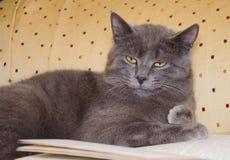 Intellectual cat over book stock photos
