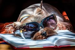 Intellectual dog royalty free stock photo