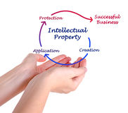Intellectual property diagram. Presenting diagram of Intellectual property Royalty Free Stock Image