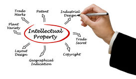 Intellectual Property. Presenting diagram of Intellectual Property Stock Photos