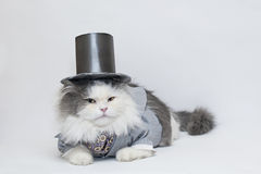 Intelligent cat Royalty Free Stock Photo