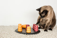 Intelligent cat playing with pet puzzle. Royalty Free Stock Photo