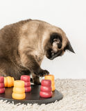 Intelligent cat playing with pet puzzle. Royalty Free Stock Photos