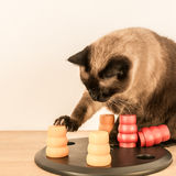Intelligent cat playing with pet toy - square. Stock Photography