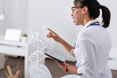 Intelligent delighted scientist doing a generic research. Modern genomics. Intelligent delighted female scientist studying the DNA model and holding a tablet Stock Photos