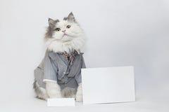 Intelligent katt Arkivfoto