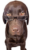 Intelligent Looking Dog Stock Photos