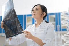 Intelligent skicklig doktor som undersöker ett foto för x-stråle arkivfoton