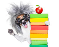 Intelligent smart  dog with books Stock Photography