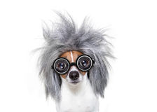 Intelligent smart  dog with an idea Royalty Free Stock Photo