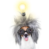 Intelligent smart  dog with an idea. Smart and intelligent jack russell dog with nerd glasses  wearing a grey hair  with an idea  with light bulb , isolated on Stock Photo