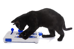 Intelligent toy for cat Royalty Free Stock Image