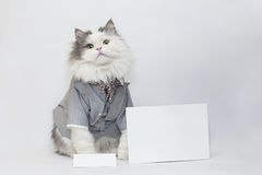 Intelligente kat Stock Foto