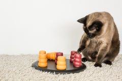 Intelligente Katze, die mit Haustierpuzzlespiel spielt Lizenzfreies Stockfoto