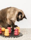 Intelligente Katze, die mit Haustierpuzzlespiel spielt Lizenzfreie Stockfotos