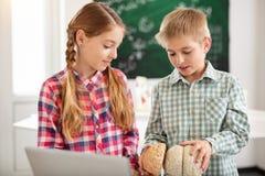 Intelligente nette Kinder, die das menschliche Gehirn betrachten Stockbild