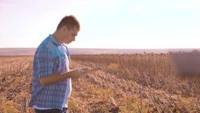 Intelligenter Landwirtschaftsmann des Landwirts gelesen oder Analyseerntesonnenblume ein Bericht im Tablet-Computer auf einem Lan stock video footage