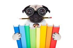 Intelligenter Schulhund Stockbilder
