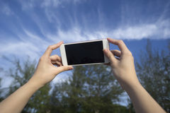 Intelligentes Telefon des Frauengebrauches machen ein Foto des blauen Himmels und der Kiefers Lizenzfreie Stockfotos