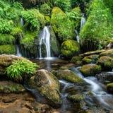 Watson Creek Cascades. Intemate Scene Of Small Cascades Babbling Through Dense Foliage Of Ferns And Moss, Watson Creek, Douglas County, Oregon royalty free stock image