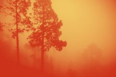 Intense flames from a massive forest fire royalty free stock images