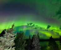 Intense green Aurora borealis over boreal forest. Intense green northern lights  Aurora borealis  on night sky with clouds and stars over boreal forest taiga of Stock Photo