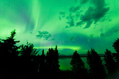 Intense green northern lights over boreal forest. Intense green northern lights  Aurora borealis  on night sky with clouds and stars over boreal forest taiga of Stock Image