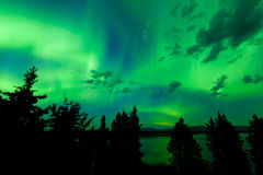 Intense green northern lights over boreal forest. Intense green northern lights  Aurora borealis  on night sky with clouds and stars over boreal forest taiga of Royalty Free Stock Photo