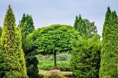 Intense groene tuin Stock Afbeeldingen