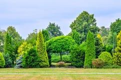 Intense groene tuin Stock Afbeelding