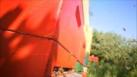 Intense het vliegen activiteit van honingbijen bij een bijenkorf stock videobeelden