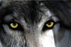 Intense look from a wolf`s eyes royalty free illustration