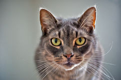 Intense looking cat Stock Photo