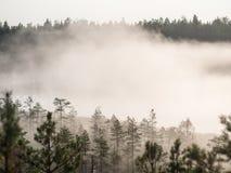 Intense morning fog Stock Images
