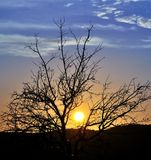 Intense sun among branches of almond tree at dawn Stock Photography