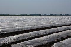 Intensief landbouwlandschap, Italië, groenten royalty-vrije stock foto's