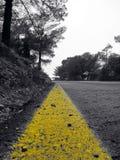 Intensiv gul linje på en skogväg royaltyfri foto