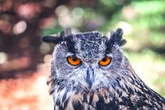Intensive Augen Stockfotos