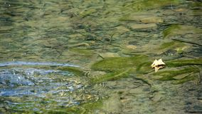 Intensive green water lily in a small lake. stock footage