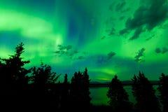 Intensive grüne Nordlichter über nördlichem Wald Lizenzfreies Stockfoto